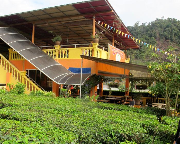 Kebun teh dan kafe