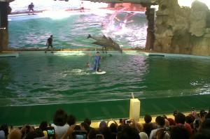 Lihat tuh gaya si lumba-lumba saat beraksi.